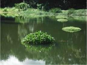 raft at halulu